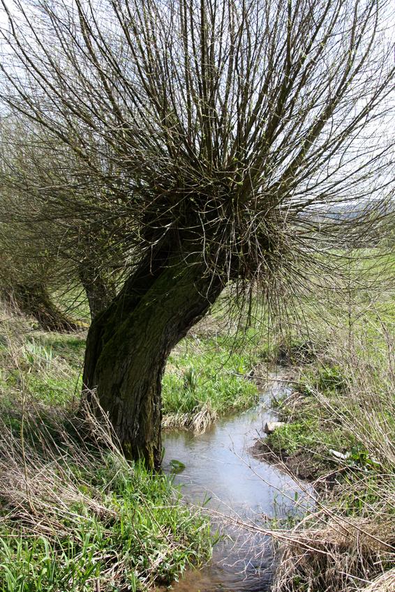 Weidenschlossgeschichten 03 - Freie Trauung