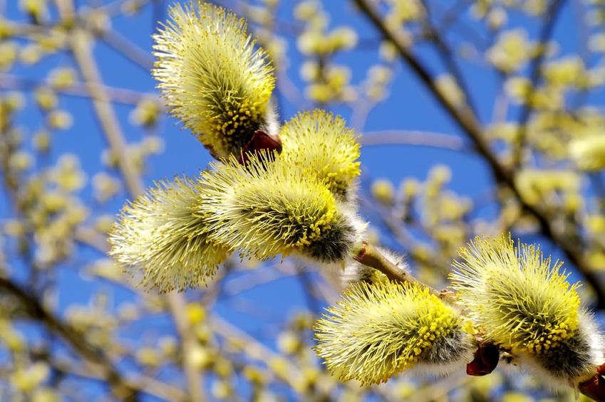 Weidenschlossgeschichten 06 - Freie Trauung