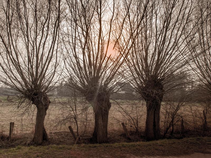 Weidenschlossgeschichten 02 - Freie Trauung